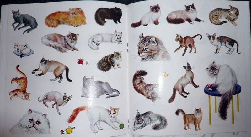 Иллюстрация 1 из 2 для Кошки. Книжка с наклейками - Инна Шустова | Лабиринт - книги. Источник: Кнопа2