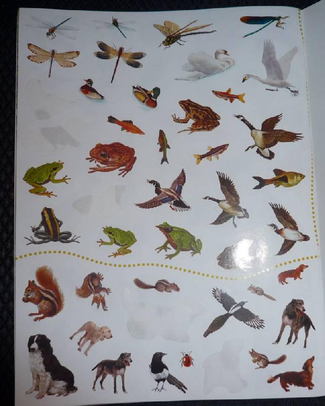 Иллюстрация 13 из 18 для Животные в городе. Живой мир планеты | Лабиринт - книги. Источник: Кнопа2