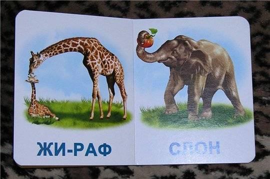 Иллюстрация 1 из 2 для Дикие животные. Мои первые книги (картонка) | Лабиринт - книги. Источник: nadin_tyum