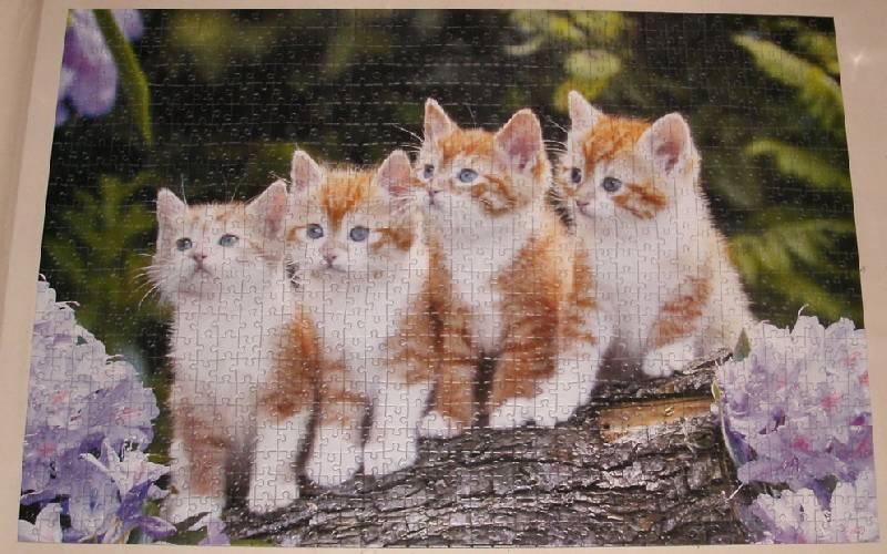 Иллюстрация 1 из 4 для Puzzle-1000. Четыре котенка (С-101344)   Лабиринт - игрушки. Источник: Ёжик