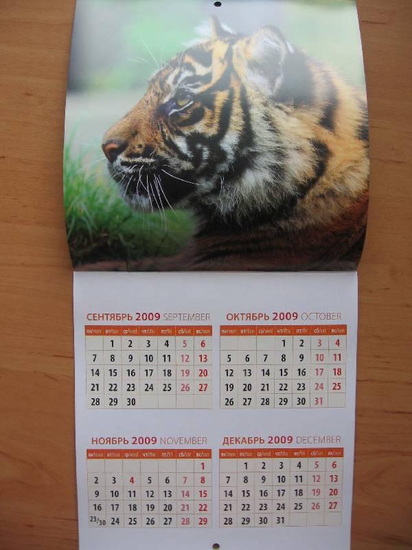Иллюстрация 1 из 5 для Календарь. 2010 год. Забавные тигрята (30907)   Лабиринт - сувениры. Источник: Red cat ;)