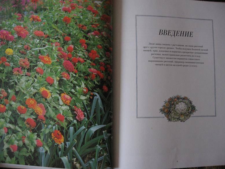 337Овощи с цветами на одной грядке фото
