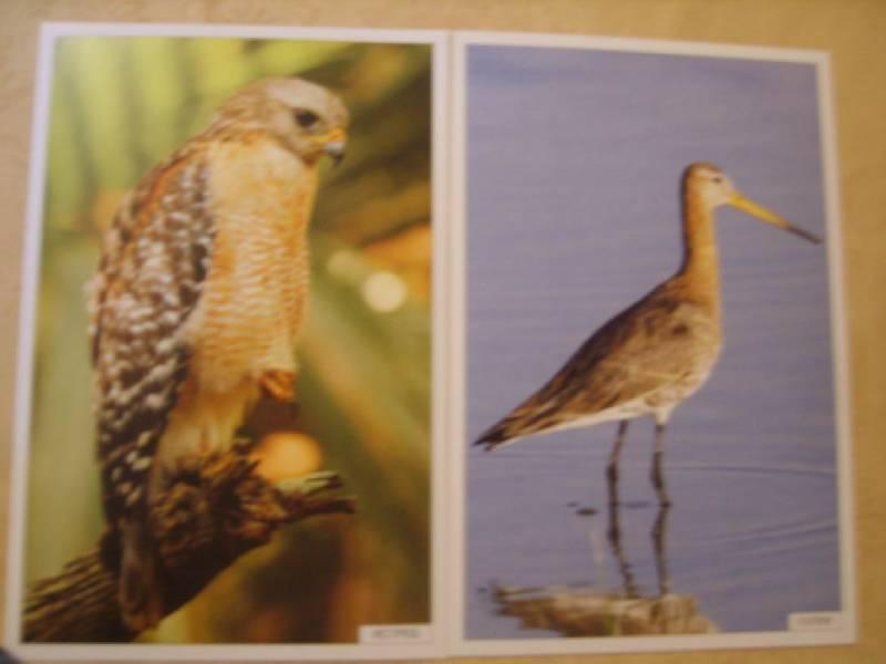 Иллюстрация 1 из 19 для Расскажите детям о птицах | Лабиринт - книги. Источник: Tatka