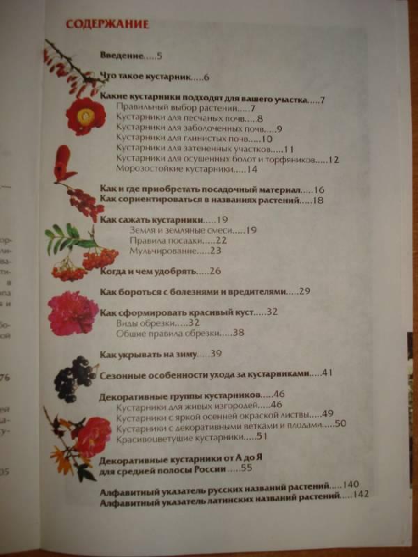 Иллюстрация 1 из 12 для Лучшие декоративные кустарники в дизайне сада - Коновалова, Шевырева | Лабиринт - книги. Источник: Паньков Александр Анатольевич