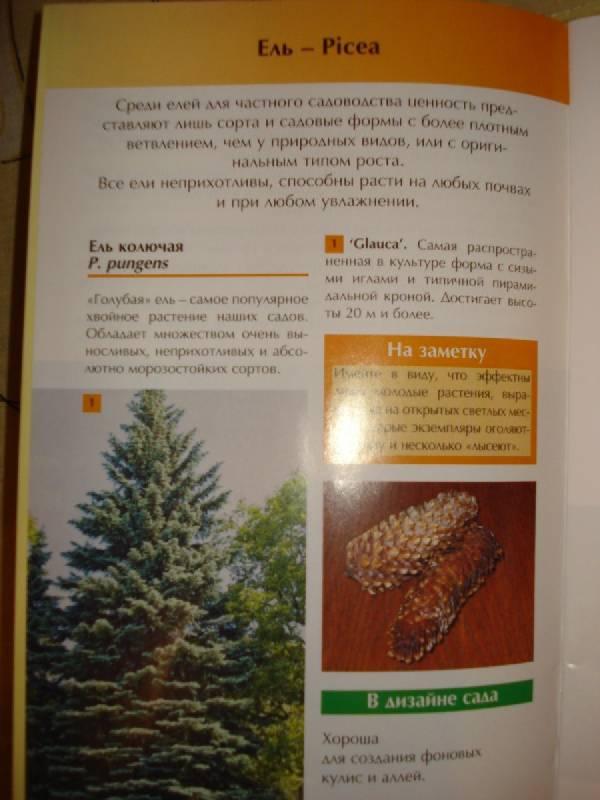 Иллюстрация 1 из 10 для Выбираем хвойные растения - Юрий Марковский | Лабиринт - книги. Источник: Паньков Александр Анатольевич