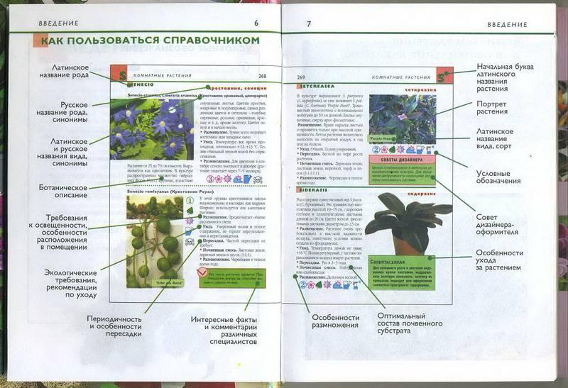 Иллюстрация 1 из 7 для Комнатные растения. Карманный справочник | Лабиринт - книги. Источник: Machaon