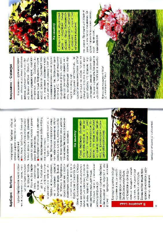 Иллюстрация 1 из 5 для Красивоцветущие кустарники в вашем саду - Ирина Окунева | Лабиринт - книги. Источник: Кузнецов  Олег