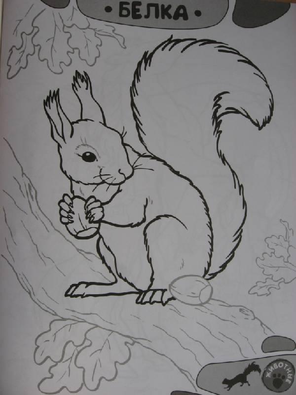 Иллюстрация 1 из 15 для Я учусь рисовать! Животные | Лабиринт - книги. Источник: Юта