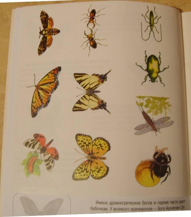 Иллюстрация 1 из 16 для Бабочки. Книжка с наклейками - Инна Гамазкова | Лабиринт - книги. Источник: Tatka