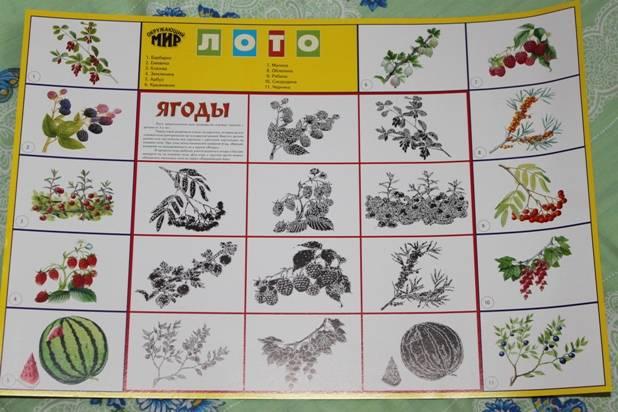 Иллюстрация 1 из 17 для Лото: Ягоды 844 (350х500) | Лабиринт - игрушки. Источник: Павлинова  Ирина Евгеньевна