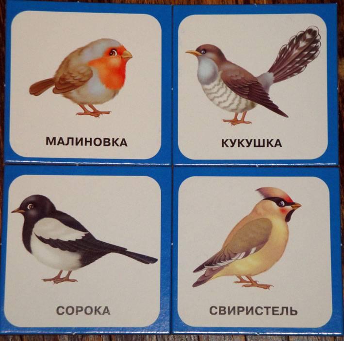 Иллюстрация 1 из 11 для Запоминайка. Птицы   Лабиринт - игрушки. Источник: АннаЛ