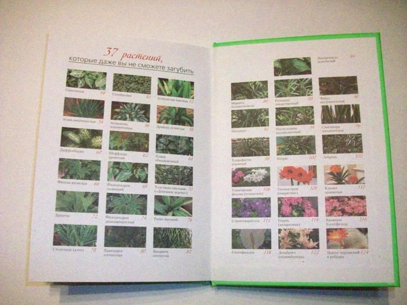 Иллюстрация 1 из 6 для 37 растений, которые даже вы не сможете загубить - Мери Хоган | Лабиринт - книги. Источник: Иванна