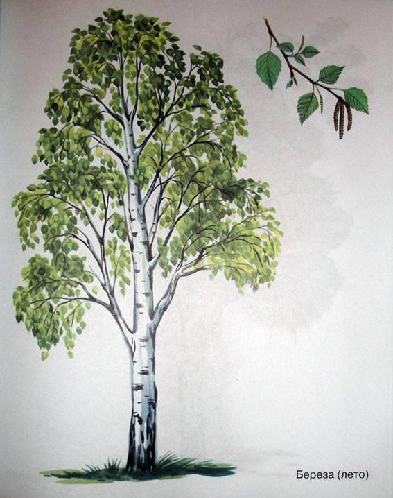 деревья знакомство в картинках