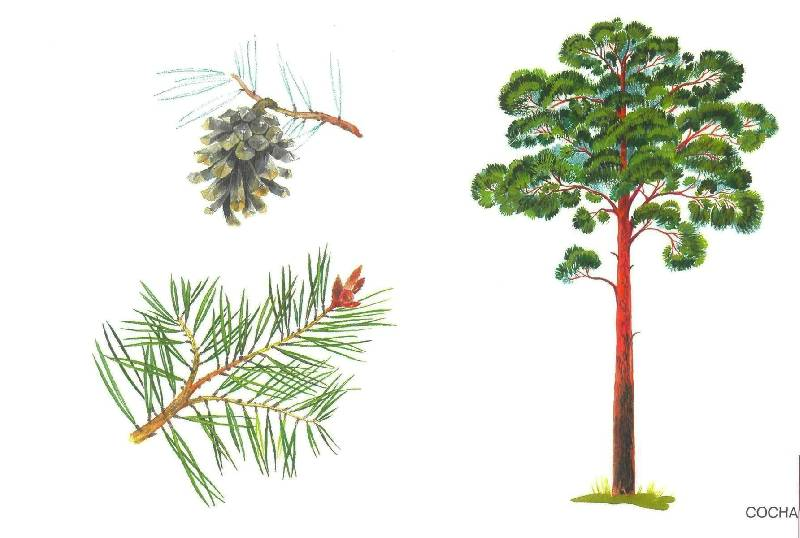 деревья картинки детские