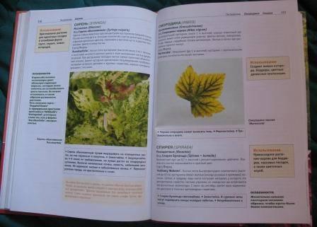 Иллюстрация 1 из 5 для Декоративно-лиственные деревья и кустарники для климатических условий России - Бондорина, Сапелин | Лабиринт - книги. Источник: jenny