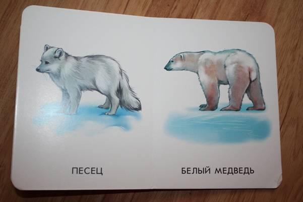 Иллюстрация 1 из 11 для Прогулка по зоопарку. 22 картинки | Лабиринт - книги. Источник: Азимус