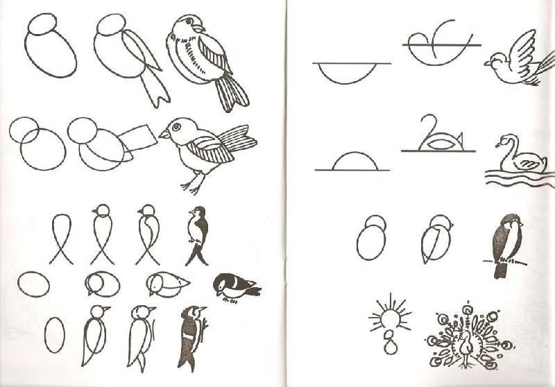 Схема малювання птаха