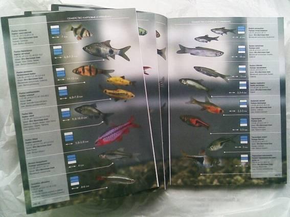 Иллюстрация 1 из 28 для Все об аквариумных рыбках. Атлас-справочник | Лабиринт - книги. Источник: Луговая Собачка