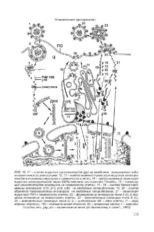 Иллюстрация 8 из 21 для Биология для поступающих в ВУЗы - Габриэль Билич | Лабиринт - книги. Источник: Юта
