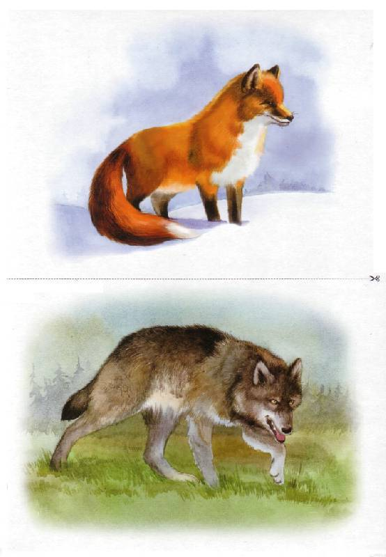 Животные их детеныши выпуск 4 нищева
