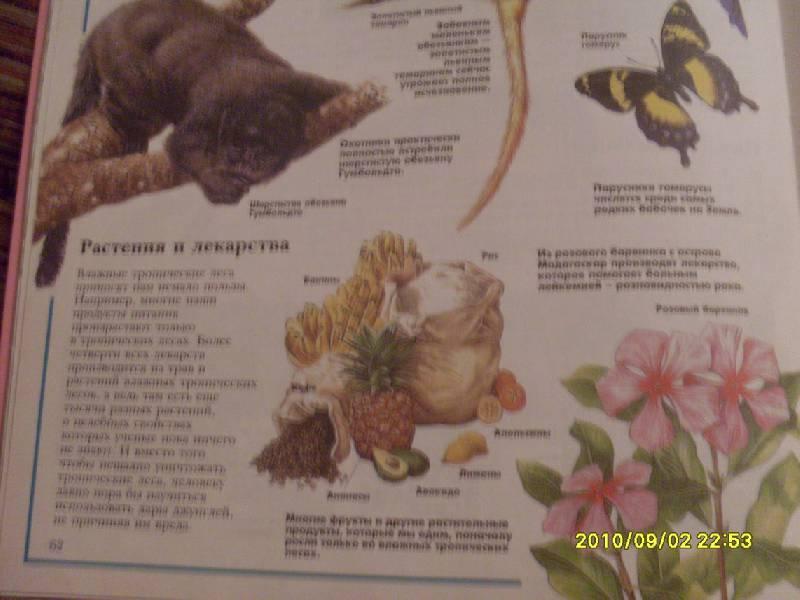 Иллюстрация 1 из 4 для Загадки дикой природы | Лабиринт - книги. Источник: Lubzhen