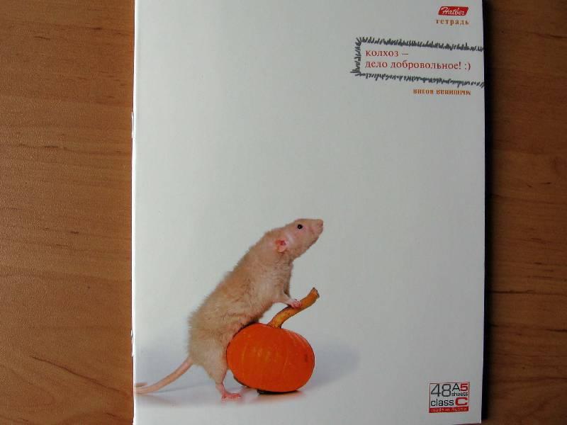 Иллюстрация 1 из 2 для Тетрадь 48 листов Мышиная возня (48Т5влС1) | Лабиринт - канцтовы. Источник: Red cat ;)
