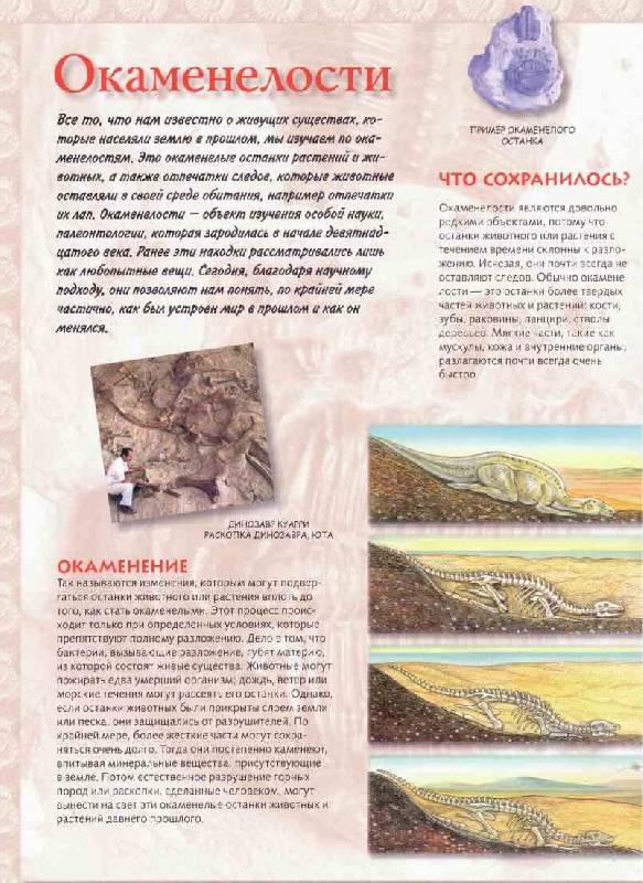 Иллюстрация 1 из 23 для Тираннозавр & Ко - М. Банфи   Лабиринт - книги. Источник: tsylpyry