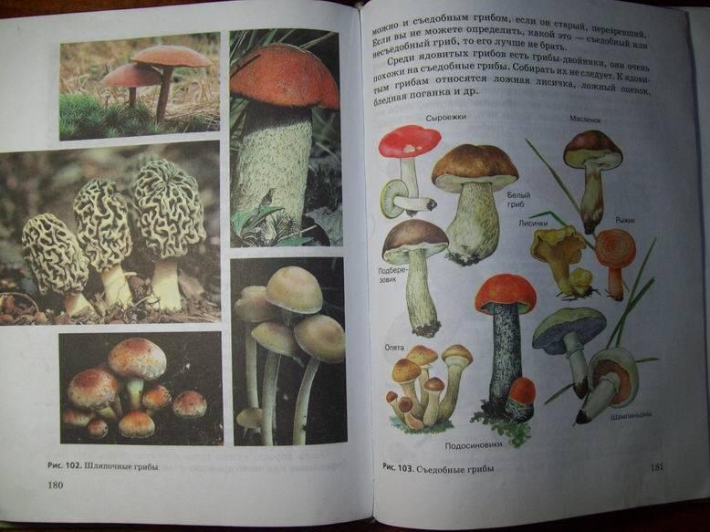В.м.пакулова решебник иванова учебник класс 5 издательство природоведение