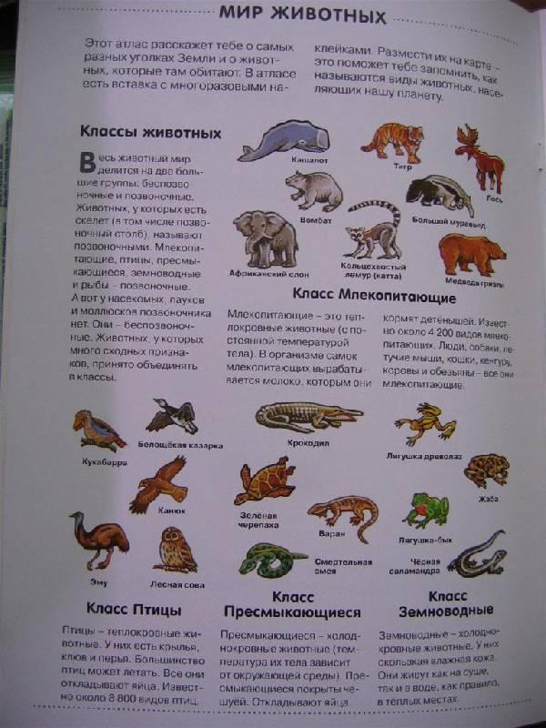 Иллюстрация 1 из 10 для Мир животных: Атлас с наклейками   Лабиринт - книги. Источник: Крошка Сью