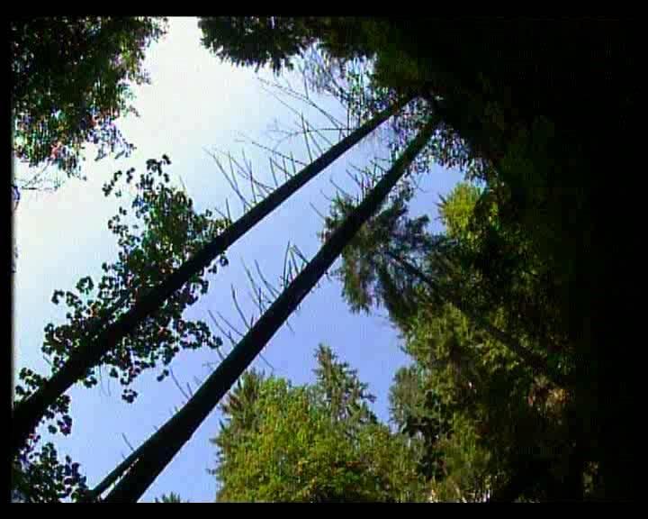 Иллюстрация 1 из 5 для Шопен. Нетронутый рай (DVD)   Лабиринт - видео. Источник: urri23
