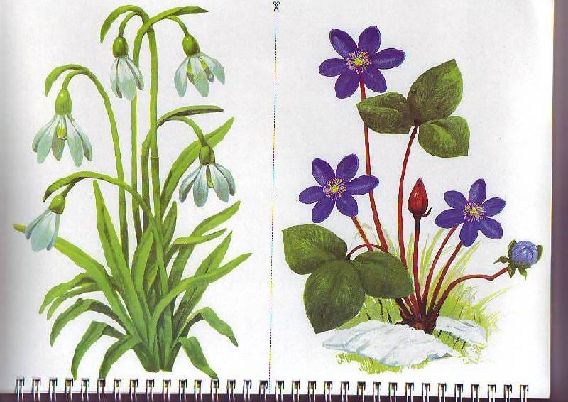 Растения картинки на белом фоне