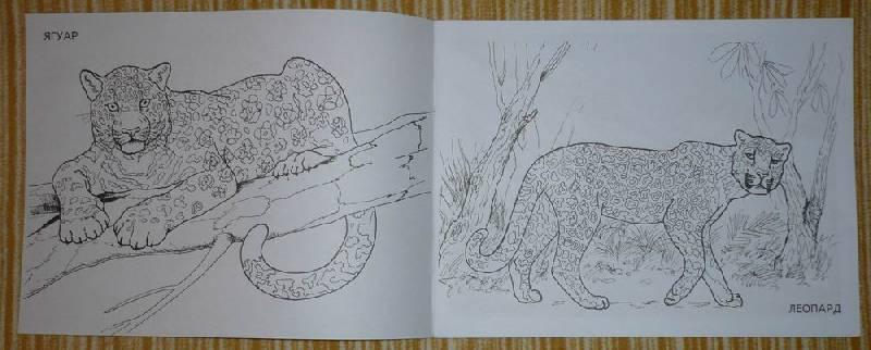 Иллюстрация 1 из 13 для Дикие кошки   Лабиринт - книги. Источник: Лора76756465