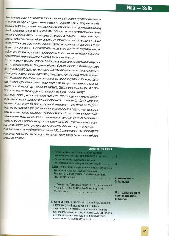 Иллюстрация 1 из 4 для Декоративные деревья и кустарники - Лилиан Плотникова | Лабиринт - книги. Источник: ТТ