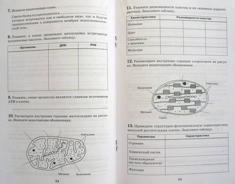 Печатная Тетрадь Биология Гдз 9