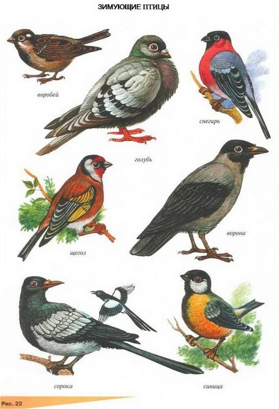 Звуки домашних птиц скачать бесплатно