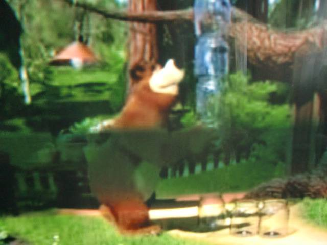 Иллюстрация 1 из 9 для Маша и медведь. День Варенья (DVD)   Лабиринт - видео. Источник: Лимпи