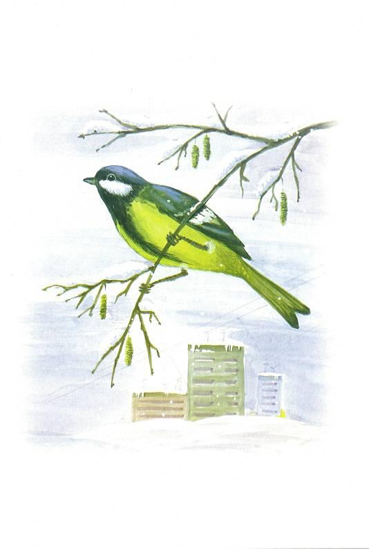 Ворона воробей дятел сова на обороте