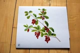 Иллюстрация 1 из 9 для Ягоды   Лабиринт - книги. Источник: Клевлеева  Ирина Владимировна
