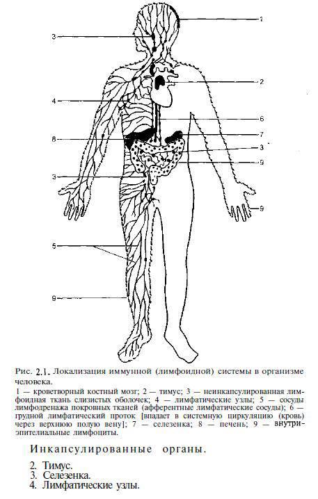 Учебник хаитов иммунология