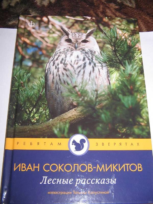 лесные картинки соколов микитов читать