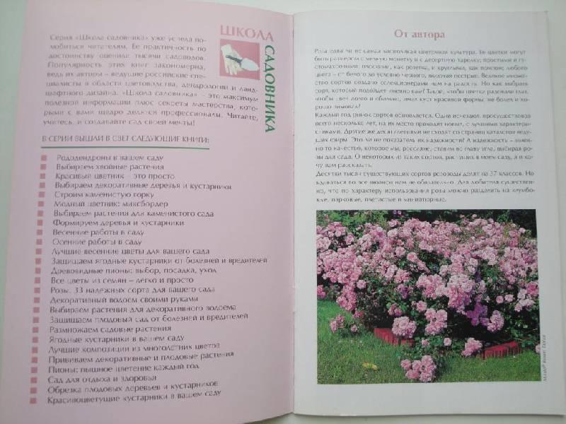 Иллюстрация 1 из 7 для Розы: 33 надежных сорта для вашего сада - Наталья Анзигитова | Лабиринт - книги. Источник: karina_pavlovna