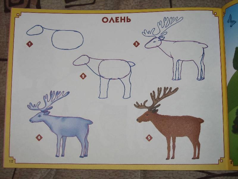 Рисование животных конспект