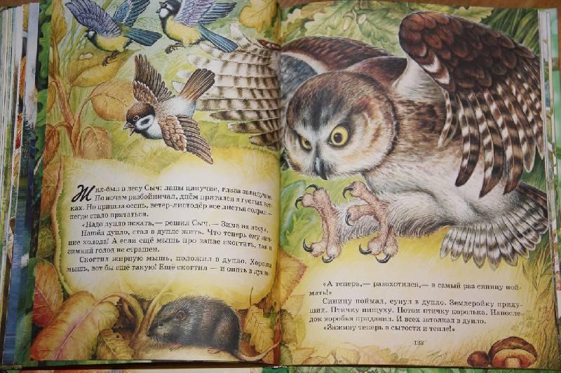 Иллюстрация 22 из 31 для Самые лучшие рассказы и сказки о животных - Бианки, Сладков, Пришвин, Шим | Лабиринт - книги. Источник: Vilvarin  laurea