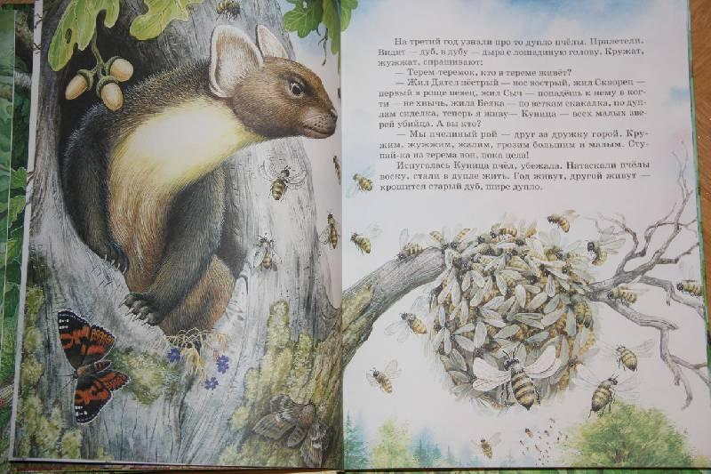 Иллюстрация 4 из 31 для Самые лучшие рассказы и сказки о животных - Бианки, Сладков, Пришвин, Шим   Лабиринт - книги. Источник: Vilvarin  laurea