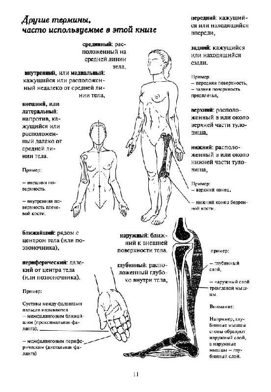 Блондин кале-жермен как работает тело позвоночник суставы и мышцы деформирующий коксартроз тазобедренного сустава 2 степени