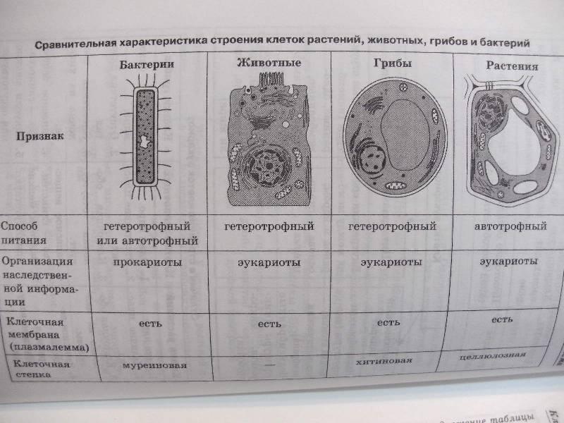 Биология в схемах и таблицах ионцева торгалов фото 795
