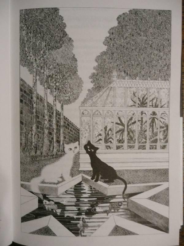 Последний черный кот книга