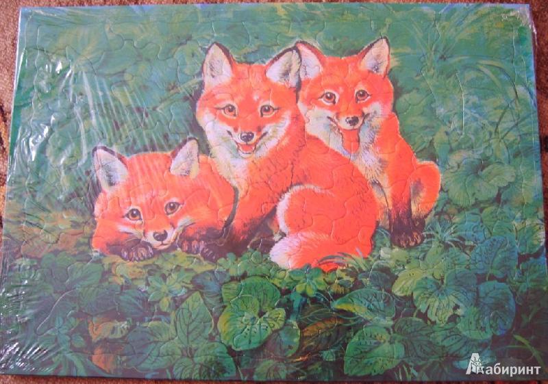 Иллюстрация 1 из 4 для Развивающие рамки. Детеныши. Лисята | Лабиринт - игрушки. Источник: Tatka