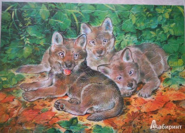 Иллюстрация 1 из 3 для Развивающие рамки. Детеныши. Волчата | Лабиринт - игрушки. Источник: Iwolga