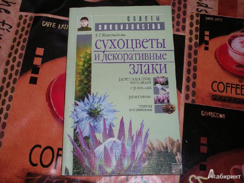 Иллюстрация 1 из 11 для Сухоцветы и декоративные злаки - Елена Колесникова   Лабиринт - книги. Источник: Tiger.